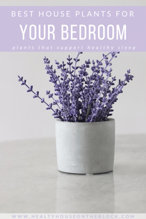 house plants for your bedroom to help you sleep