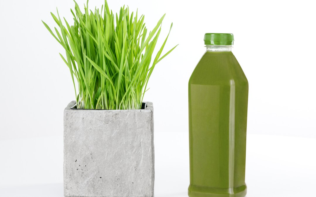 What is Wheatgrass?