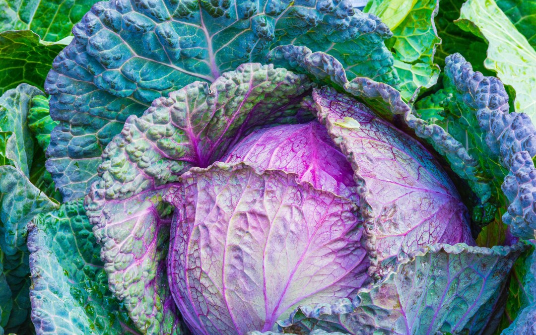 Overall Tips for Juicing Greens