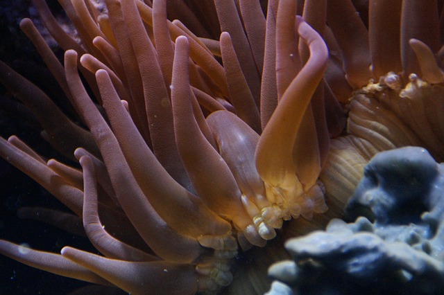 coral-284089_640