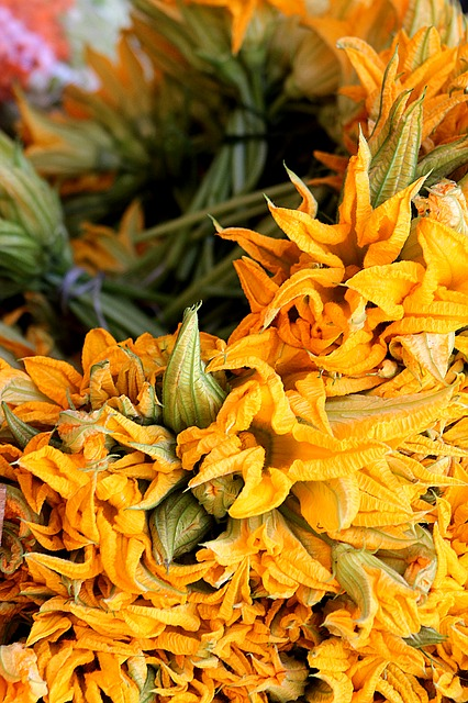 Squash Blossoms, great for stuffing