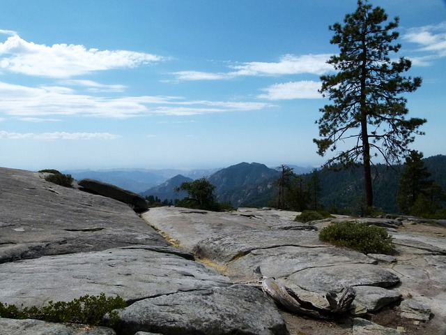 sequoia-national-park-53289_640