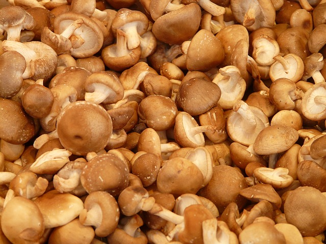 Mushrooms; shiitake contain 3.59mg per 100g