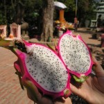 dragon-fruit-441_640