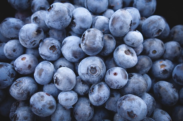 Blueberries, fresh or dried