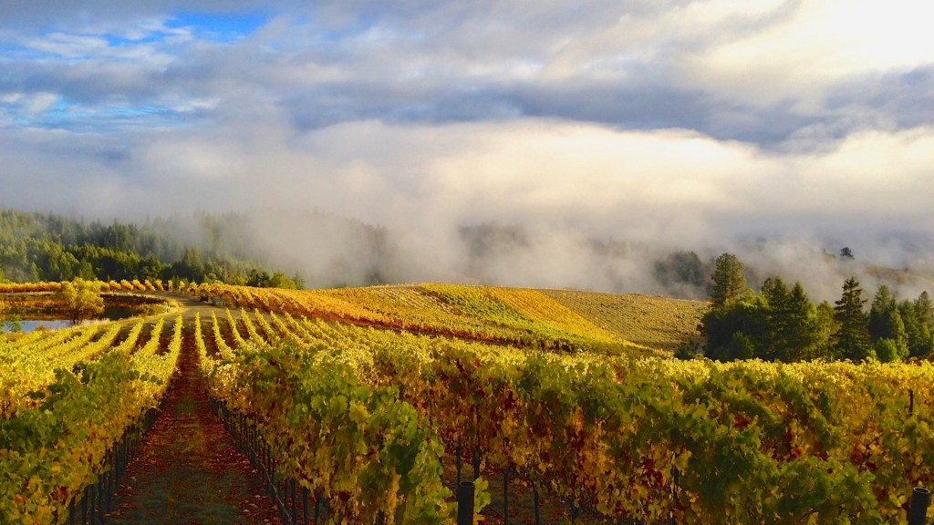 Alder Springs Vineyard, Mendocino County, California, Healthy Living + Travel
