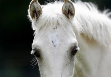 Oklahoma's Choctaw horses discovered in Mississippi, Healthy Living + Travel
