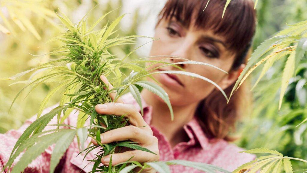 Cannabis, Juno CBD