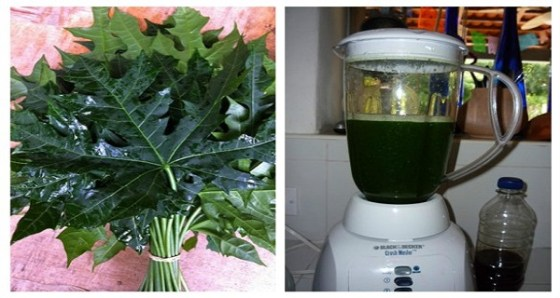 "This Plant Is Called ""God's Gift"" Because It Can Cure More Then 100 Diseases!!!!! (RECIPE)"