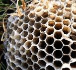 Empty Bee Hive