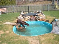 8 Dog-Friendly Backyard Ideas | Healthy Paws