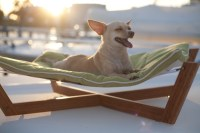 Find Your Picky Pup the Perfect Dog Bed   Healthy Paws Pet ...