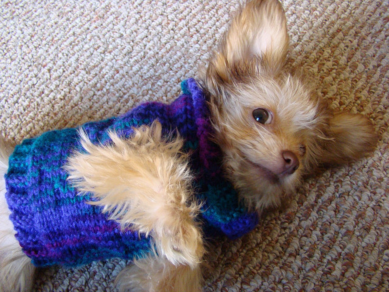 8 Dog Clothes That Are Actually Practical