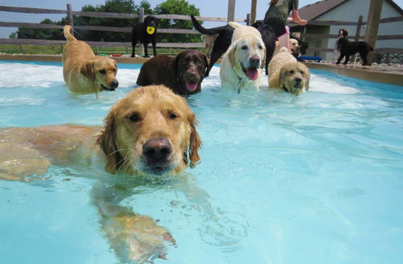 Summer Doggy Date Ideas  Healthy Paws