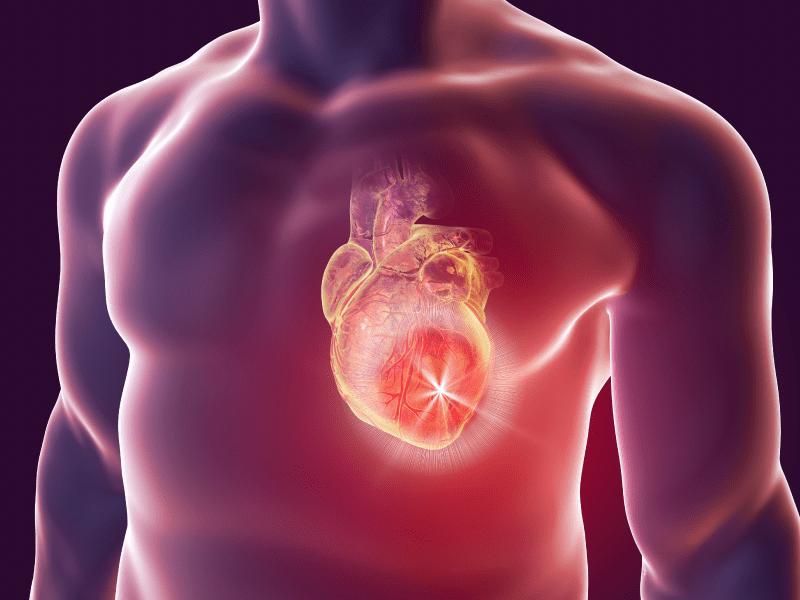 the heart isn t