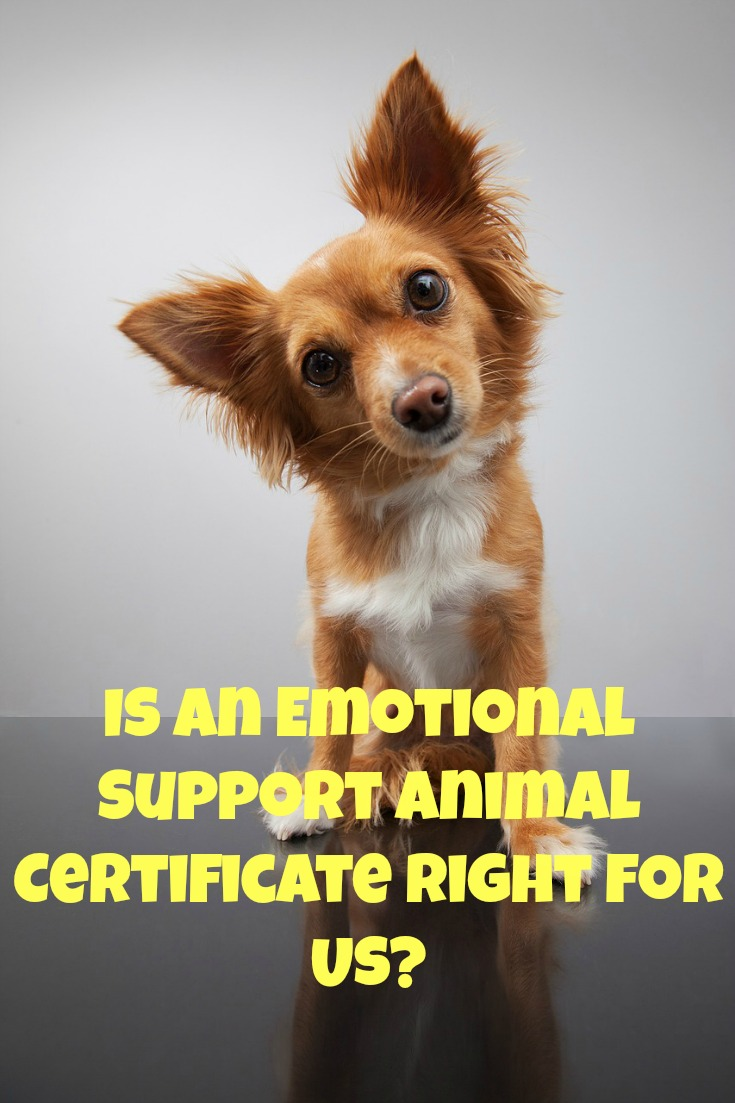 Benefits of Obtaining an Emotional Support Animal Certificate ...