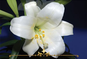 Gardenia Scented Candles