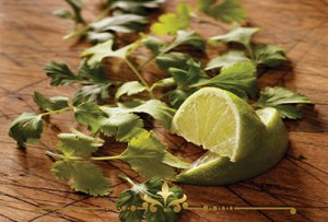 Lime Cilantro Scented Candles