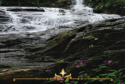 Rain Forest Blossom