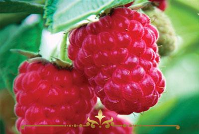 Sun Ripened Raspberries