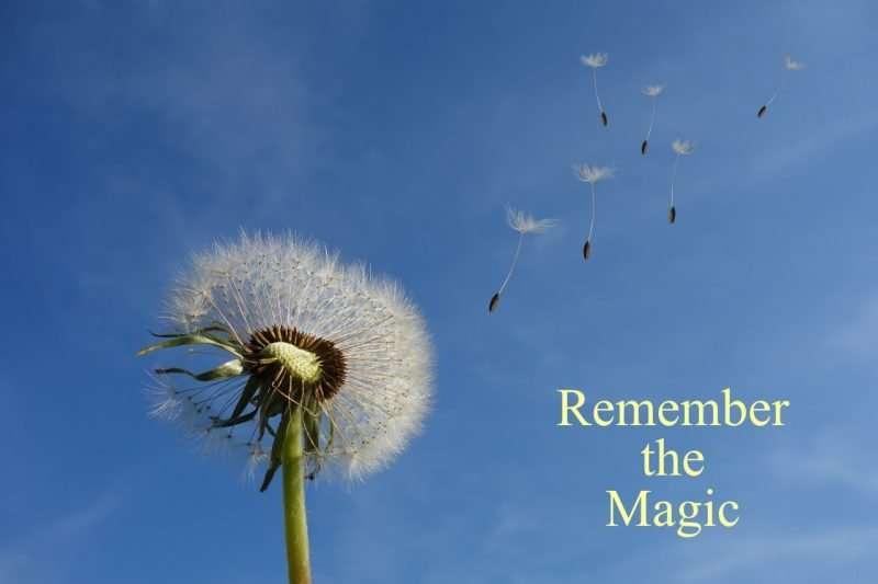Dandelion seeds blowing in the wind.