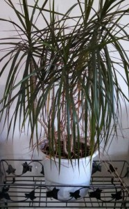 Thriving house plant