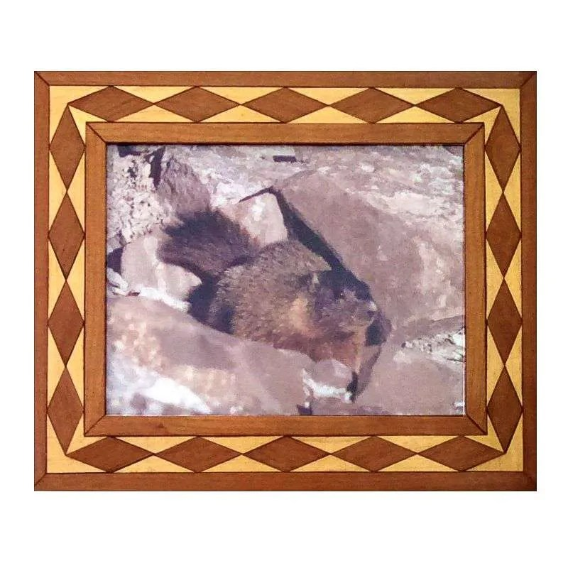 Rock chuck photograph in handcrafted diamond pattern hardwood frame.