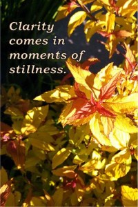 Clarity comes in moments of stillness.