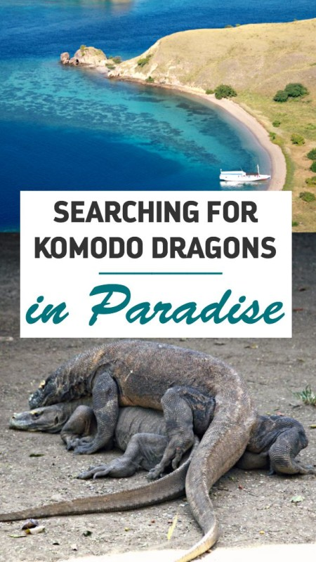 Searching for Komodo Dragons in Paradise