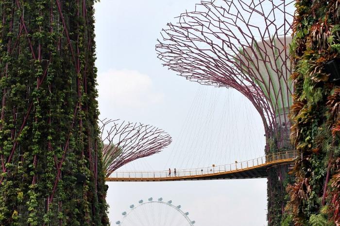 Skywalk Gardens by the Bay Singapore