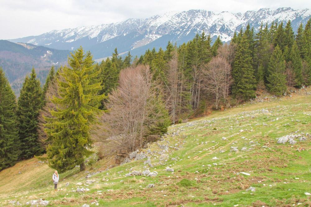 Piatra Craiului Park Romania