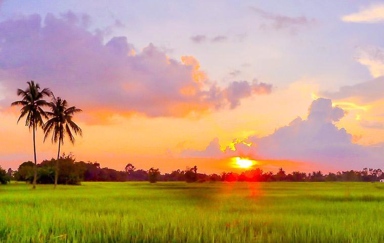 rice paddies Isaan, Thailand