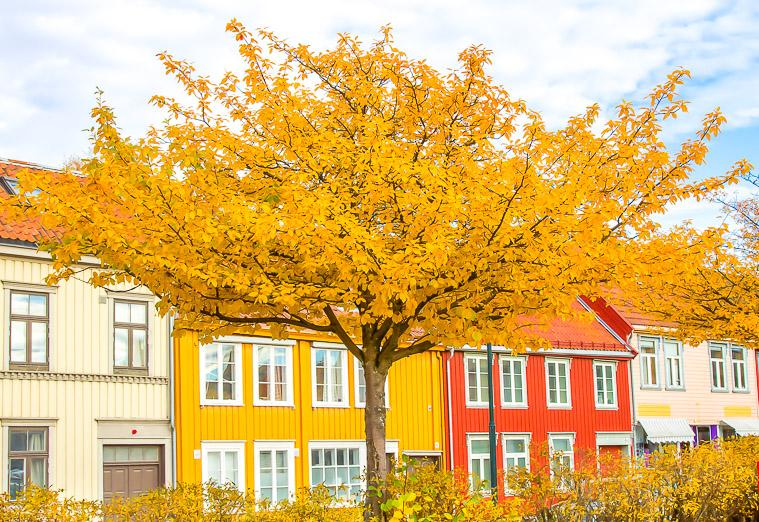fall colours Trondheim Norway