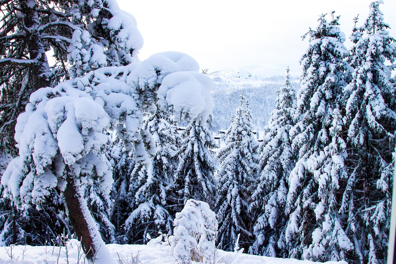 winter Rauland Norway