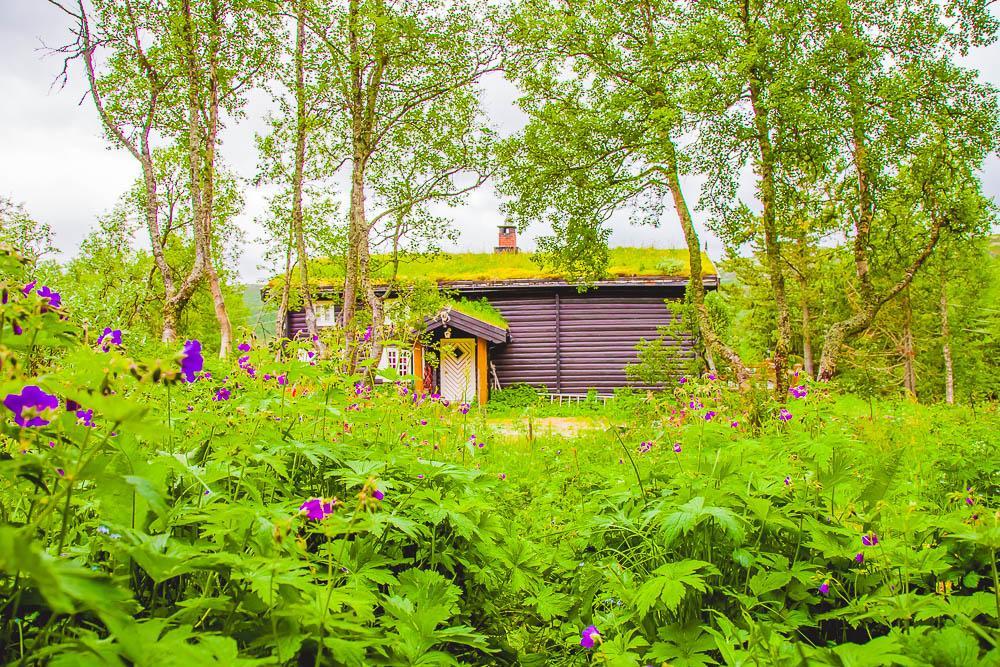 norwegian log cabin rauland telemark norway