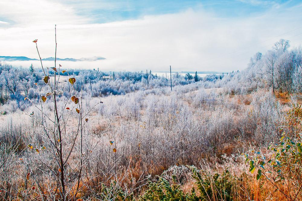 autumn in Norway frost Rauland Hardangervidda