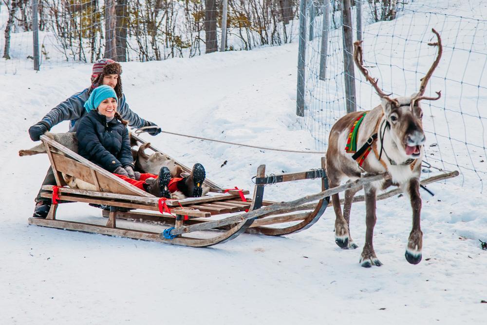 riding in a reindeer sleigh abisko kiruna swedish lapland sweden