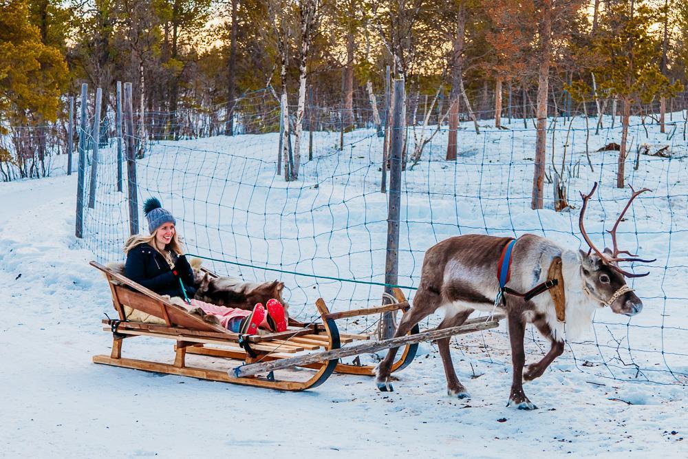 reindeer sleigh swedish lapland kiruna abisko sami tour