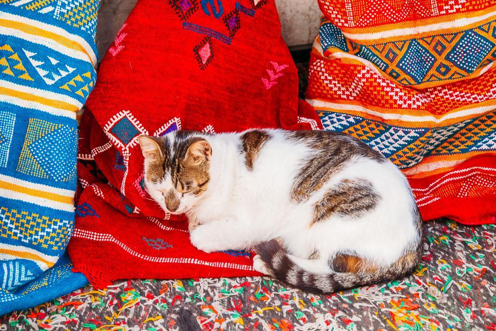 cats essaouira street morocco