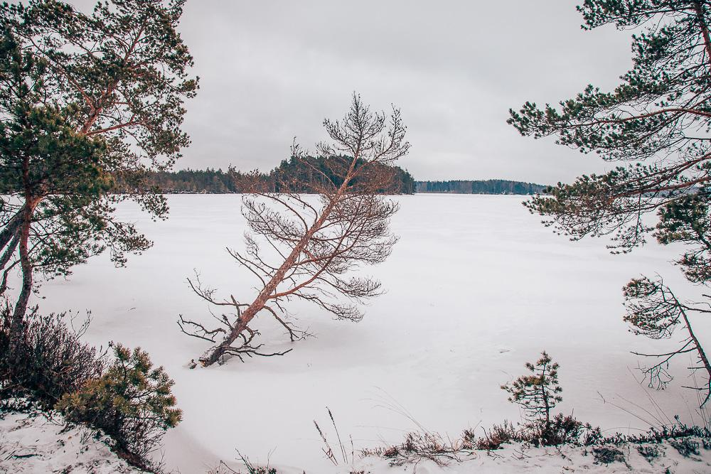 Kurjenrahka National Park turku finland winter