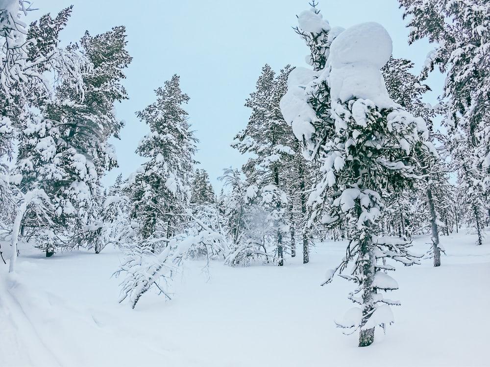 snowy trees saariselka inari finland winter