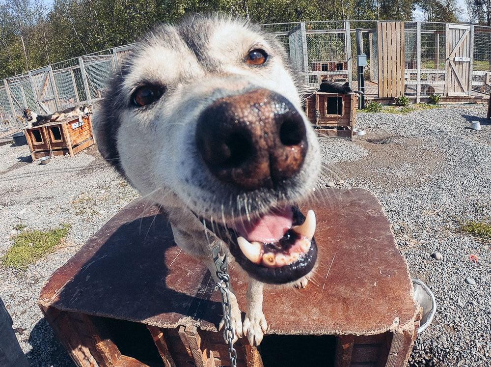 holmen husky lodge in alta in summer
