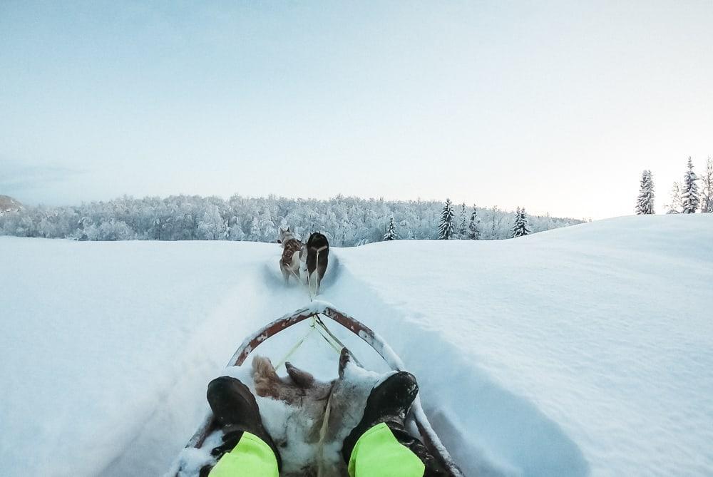 huskies northern norway