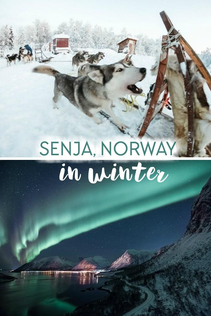 Winter in Senja, Norway, including husky sledding and chasing the Northern Lights in Norway