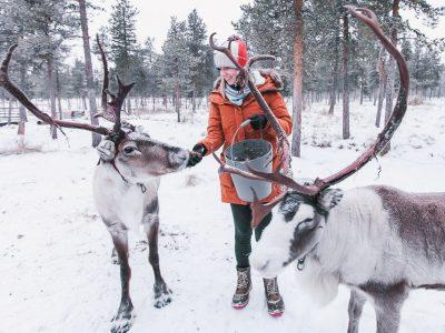 The Airbnb in Swedish Lapland Where You Can Stay with Reindeer