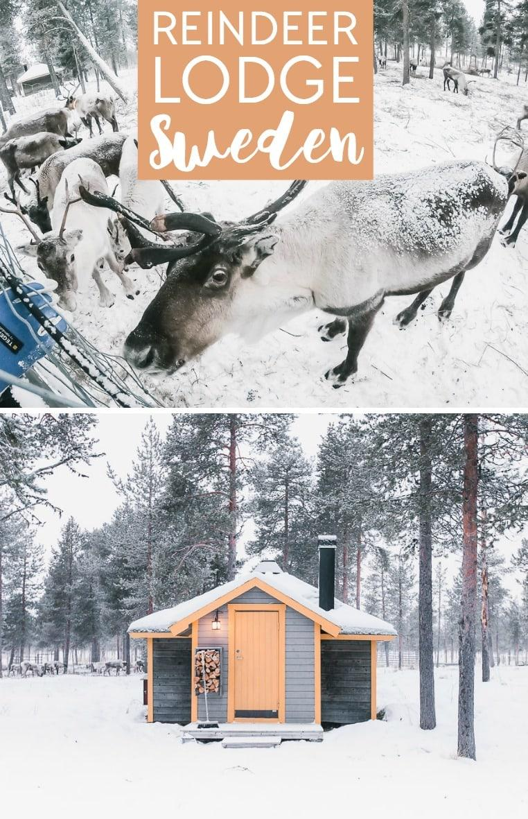 Reindeer Lodge in Kiruna, Sweden: an Airbnb where you can stay in a cabin with reindeer in Swedish Lapland