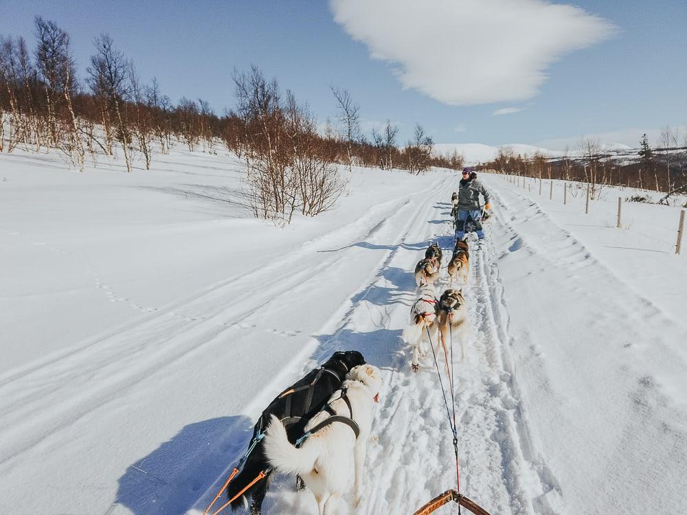 husky sledding with Aaslid Polar in susendal hattfjelldal helgeland norway