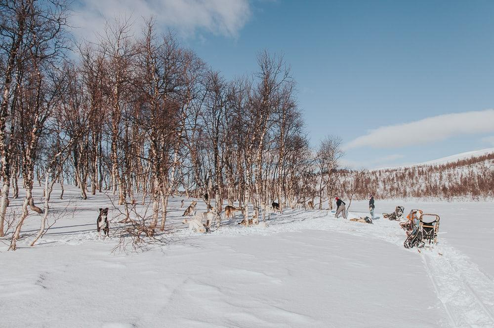 husky trip with Aaslid Polar in susendal hattfjelldal helgeland norway