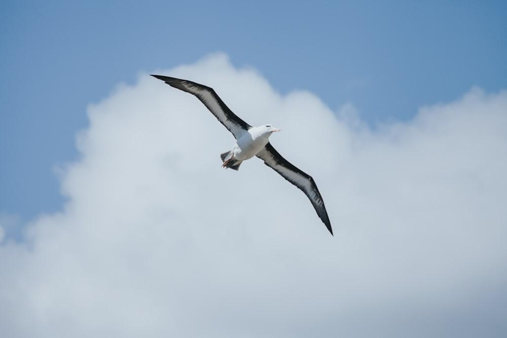 albatross west point falkland islands