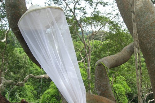 Light-trapping equipment in ca. 50 m height on a Koompassia tree, well above the forest canopy